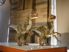moving exhibit of Deinonychus