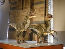 moving exhibit of Deinonychus